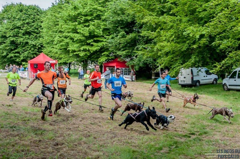 epreuves sportives canines (2)